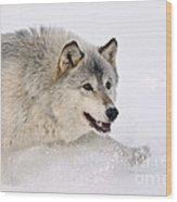 Gray Wolf Wood Print