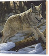 Gray Wolf - Just For Fun Wood Print by Crista Forest