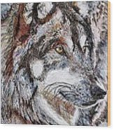Gray Wolf Watches And Waits Wood Print by J McCombie
