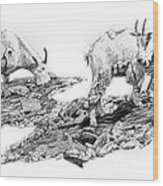 Grazing Wood Print by Aaron Spong