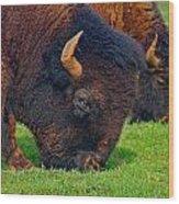 Grazing Buffaloes Wood Print