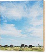 Grazing Cattle Wood Print