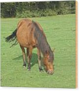 Grazing Chestnut Pony Wood Print