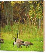 Grazing Geese Wood Print