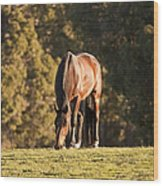 Grazing Horse At Sunset Wood Print