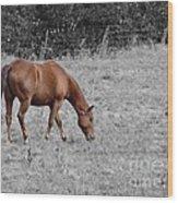 Grazing Horse Wood Print