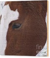 Grazing Horse  Wood Print by Kimberly Maiden