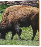 Grazing In The Grass Wood Print