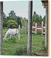 Grazing In The Meadow Wood Print by Dianne  Lacourciere