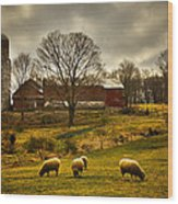 Grazing North South East And West Wood Print