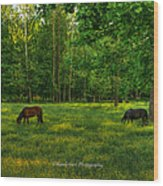 Grazing Wood Print by Paul Herrmann