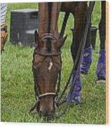 Grazing Polo Pony Wood Print