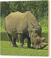 Grazing Rhino Wood Print