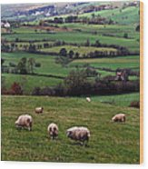 Grazing Sheep In Green Fields Wood Print