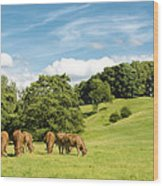 Grazing Summer Cows Wood Print