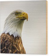 Great American Bald Eagle Homer Alaska Wood Print by Natasha Bishop