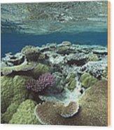 Great Barrier Reef Near Port Douglas Wood Print