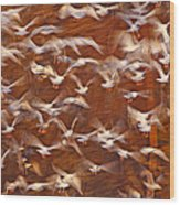 Great Black-backed Gulls Wood Print