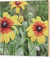 Great Blanket Flower Gaillardia Wood Print