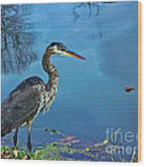Great Blue Along The Canal Wood Print