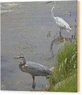 Great Blue And White Egrets Wood Print