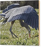Great Blue Dining Out Wood Print