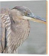 Great Blue Heron 4 Wood Print