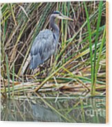 Great Blue Heron 9 Wood Print