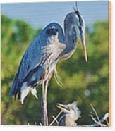 Great Blue Heron And Baby Wood Print