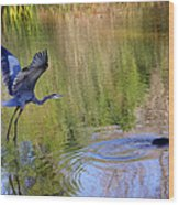 Great Blue Heron And Coot Wood Print