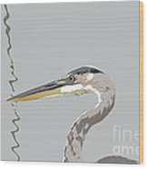 Great Blue Heron And Rushes Wood Print