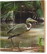 Great Blue Heron By Pond Wood Print