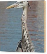 Great Blue Heron By The Water Wood Print