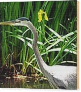 Great Blue Heron By Yellow Flower Wood Print
