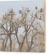 Great Blue Heron Colony Wood Print