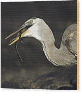 Great Blue Heron Eating Marine Iguana Wood Print by Tui De Roy