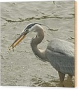 Great Blue Heron Fishing Wood Print