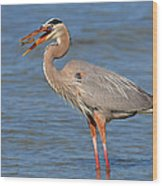 Great Blue Heron Flipping A Shrimp Wood Print