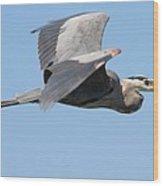 Great Blue Heron Flying Wood Print