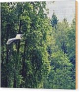 Great Blue Heron Flying Past The Trees Above Trojan Pond 2 Wood Print