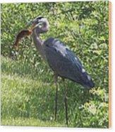 Great Blue Heron Grabs A Meal Wood Print