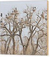 Great Blue Heron Hangout Wood Print