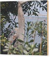 Great Blue Heron II Wood Print