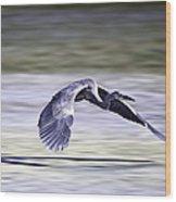 Great Blue Heron In Flight Wood Print