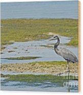 Great Blue Heron In Florida Wood Print