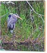 Great Blue Heron In Nature Wood Print