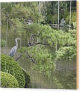 Great Blue Heron In Pond Kyoto Japan Wood Print