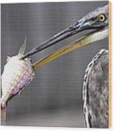 Great Blue Heron - Just Fred Wood Print