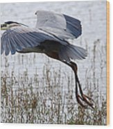 Great Blue Heron Landing Series 3 Wood Print