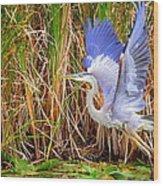 Great Blue Heron Lift Off Wood Print